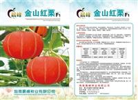 金紅栗南瓜種子,廠家直銷,高產抗病,品質優良