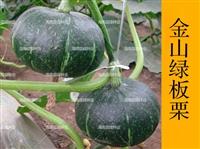 板栗南瓜種子,廠家直銷,產量高,抗病強