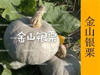 金山銀板栗南瓜種子,廠家直銷