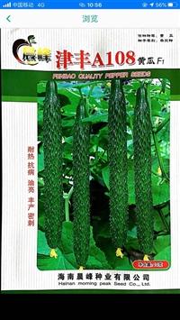 批發黃瓜種子,廠家直銷,耐熱抗病,密刺