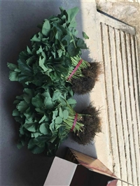桃薰草莓苗 蓝莓苗 早蓝蓝莓苗 种植基地