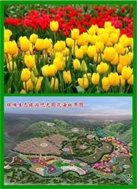 花海主题千屈菜种子出售四季开花
