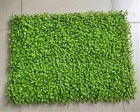 仿真植物墙防燃阻燃米兰草坪