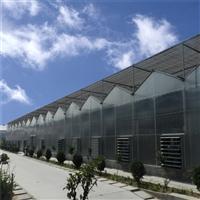 连栋阳光板温室造价 定制阳光板温室造价 金德鑫PC板大棚设计