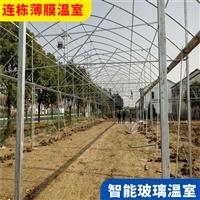 惠州惠陽外遮陽連棟大棚 連棟溫室大棚可支持定制價格