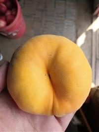 中蟠7桃苗批发价格,中蟠7桃苗亩产量多少