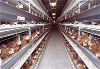 直销智能化蛋鸡笼 肉鸡笼 三层四层笼具