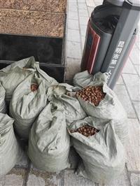 娄底陶粒生产厂家 建筑陶粒 页岩陶粒 回填陶粒