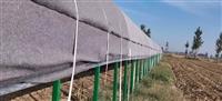 温室大棚 养殖用拱棚 热镀锌钢管猪棚鸡棚