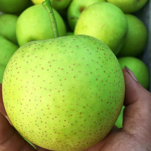 皇冠梨多少钱一斤 皇冠梨水多吗