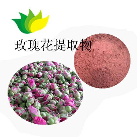 白芍提取物 高含量的芍药提取物厂家 供应优质