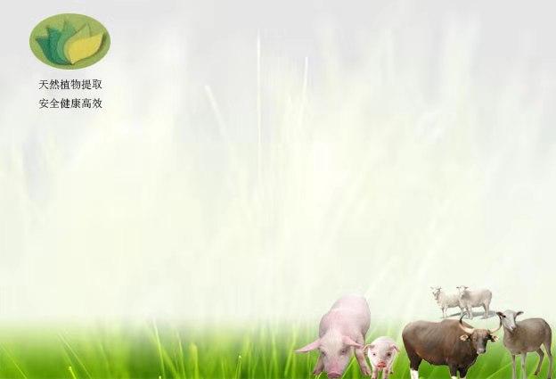 淫羊藿提取物 高含量的提取物报价 品质精粹