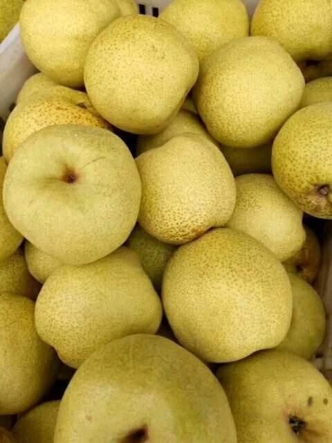 绿宝石梨 砀山营养丰富酥梨