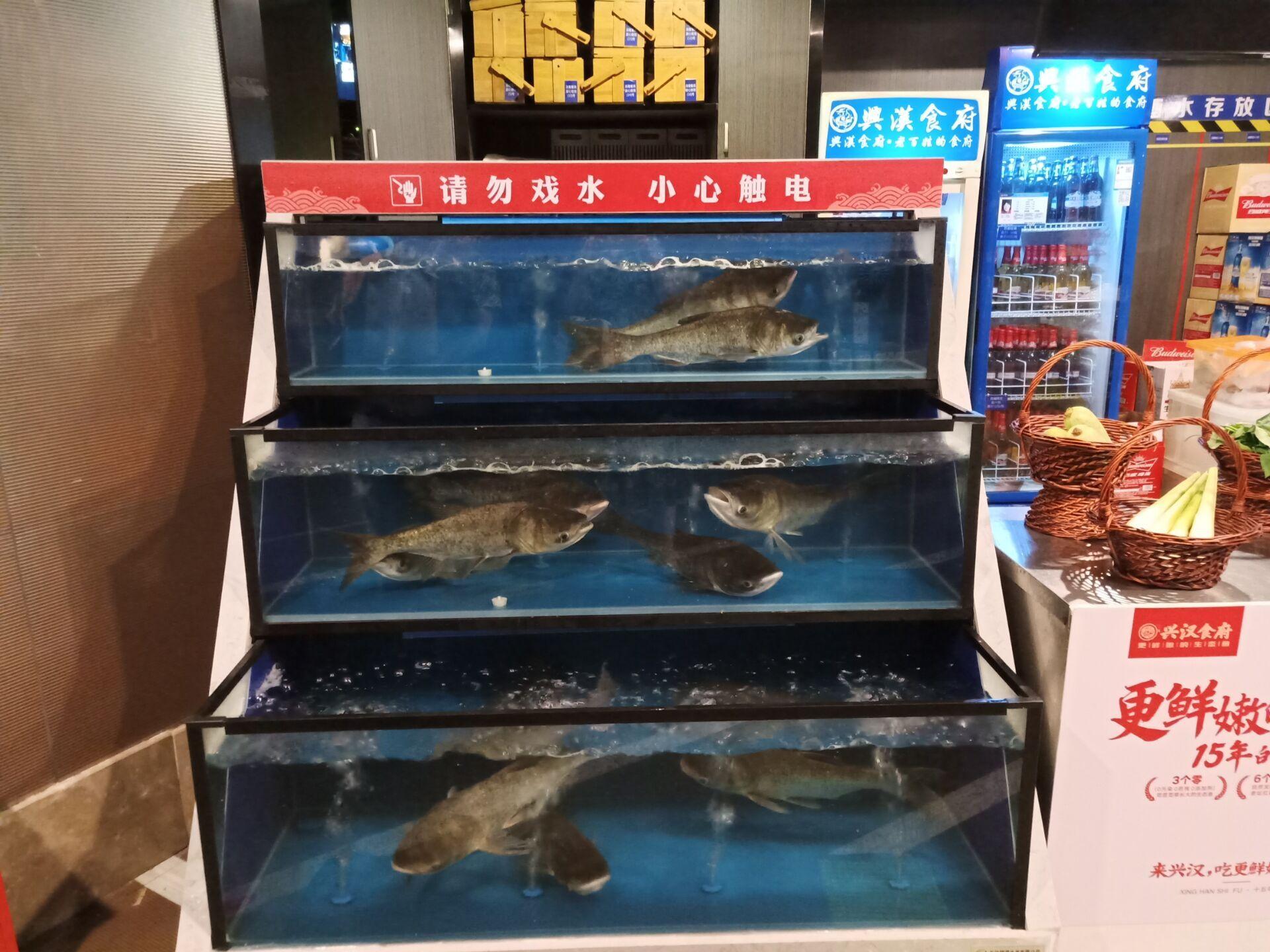 超市鱼缸制作 张家界简易鱼缸工程