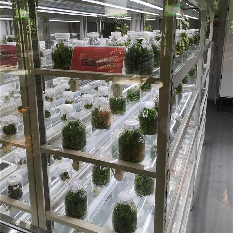 组培灌装机 培养基自动定量灌装机报价