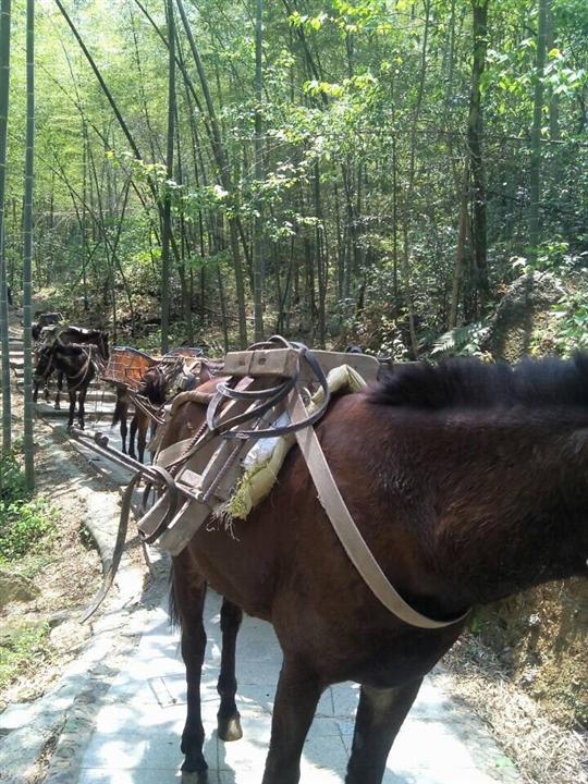 马队运输队 辽宁水泥马帮运输怎么收费