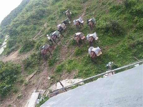 塔基建设材料马队运输 南宁水泥工程马帮运输怎么收费