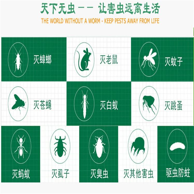 装修白蚁预防