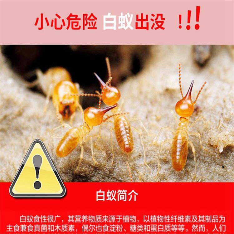 灭白蚁 棠下小区灭鼠企业
